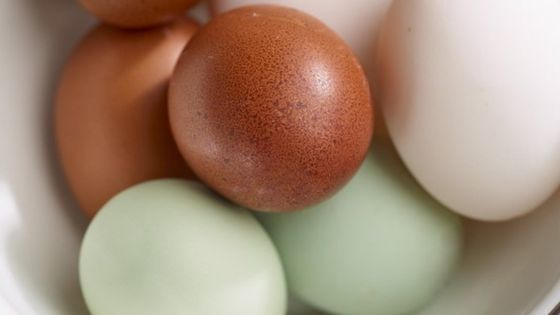 96031679 eggs - As sure as eggs is eggs? It's not that simple any more